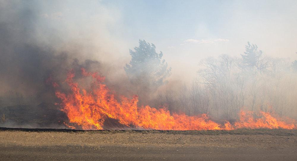 Оперативный мониторинг пожаров на о. Мадейра для МЧС России (13.08.16)