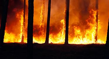 Оперативный мониторинг пожаров на о. Мадейра для МЧС России (16.08.16)